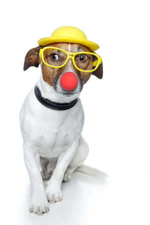 carnival costume: dog with red nose and yellow hat
