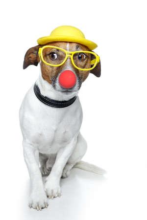 carnaval: hond met rode neus en gele hoed