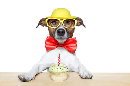 birthday cupcake: dog with a cupcake