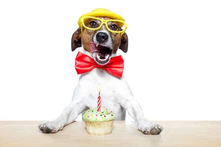 dog with a cupcake photo