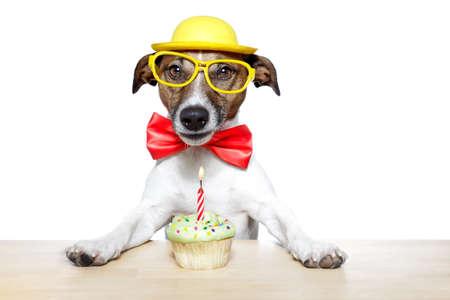 perro comiendo: perro con una magdalena Foto de archivo