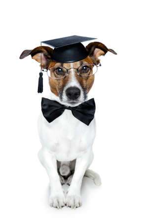 dog school: graduated dog Stock Photo