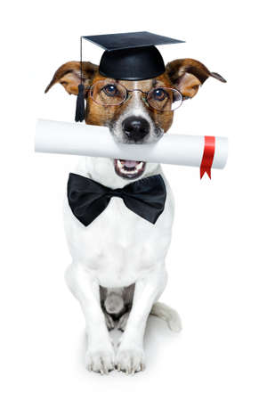 russell: dog with diploma and graduated
