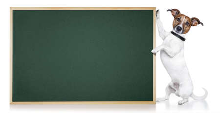 dog with blackboard Stock Photo - 12215406