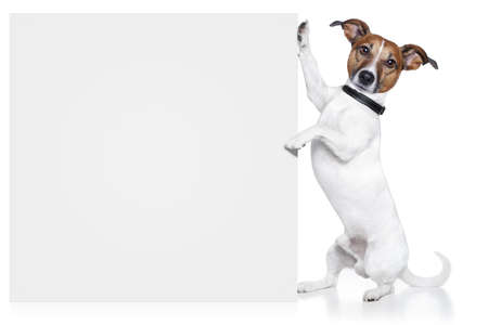 dog school: dog with white banner
