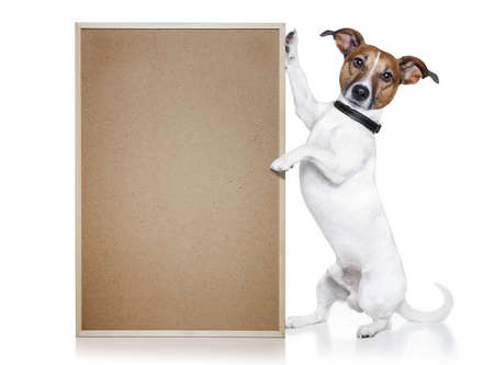 dog with cork banner Stock Photo - 12215405