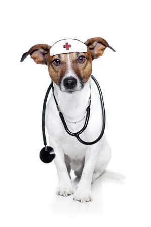 veterinario: perro como una enfermera con el estetoscopio