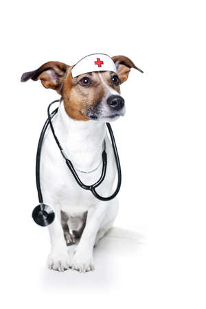 dodog as a nurse with stethoscope photo
