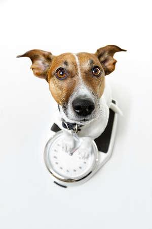 kilo: perro en una escala Foto de archivo