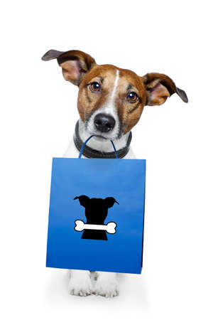 jack russell: dog shopping Stock Photo