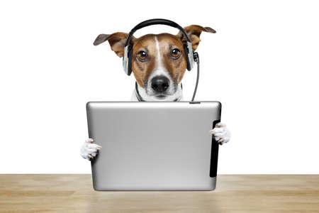 casque audio: chien avec un casque et un Tablet PC