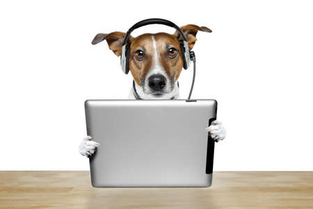 jack russell: dog with headset and a tablet pc Stock Photo
