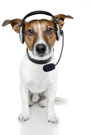 jack russell: dog with headset