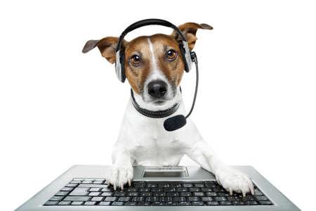 auriculares dj: perro con kit manos libres portátil con un ordenador portátil Foto de archivo