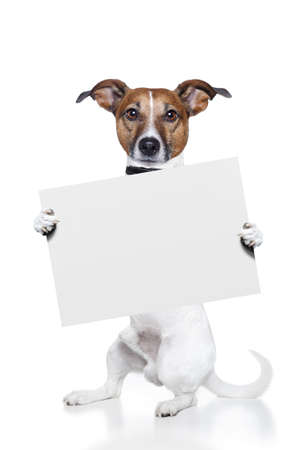 dog with  banner photo
