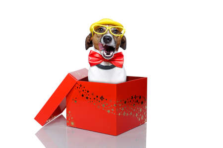 jack in a box: dog in a red box Stock Photo