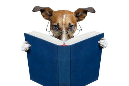 dog sitting: dog reading a blue book Stock Photo