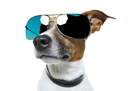 shades: dog with blue shades bored to tears from the side