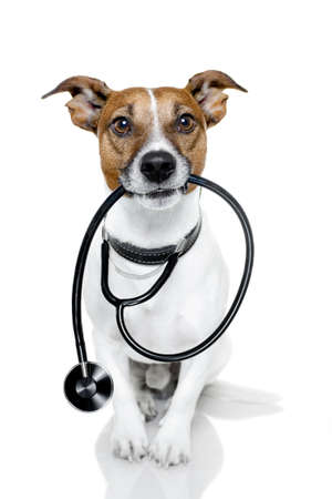 veterinarian: dog with stethoscope  Stock Photo