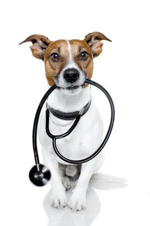 veterinario: perro con el estetoscopio
