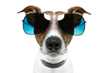 dog with blue shades bored to tears frontal photo