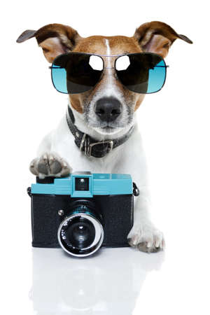 dog with blue shades taking a photo with camera Stock Photo
