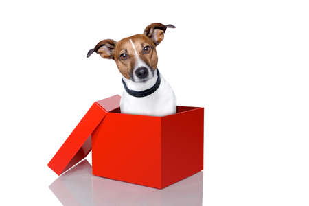 dog in a red box photo
