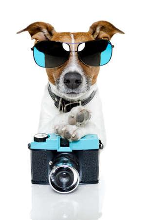 perros graciosos: perro con tonos de tomar una foto Foto de archivo