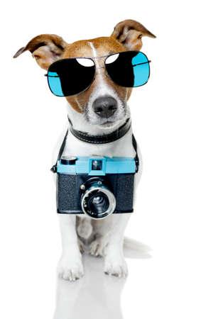 photo camera: cane con sfumature di scattare una foto