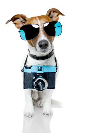 photo camera: dog with shades taking a picture
