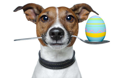 brown eggs: dog with easter egg
