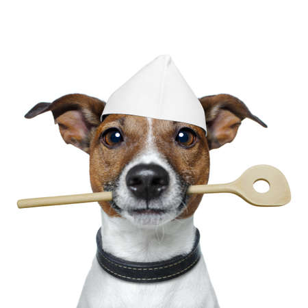 cocineras: perro como jefe de cocina Foto de archivo