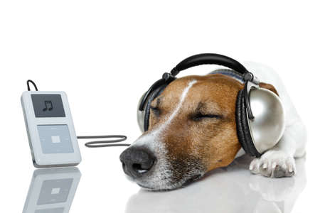 dog listening to music with headset photo