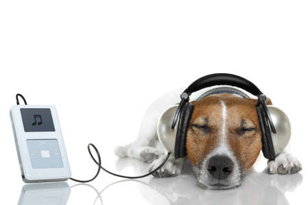 miniature dog: dog listening to music with headset