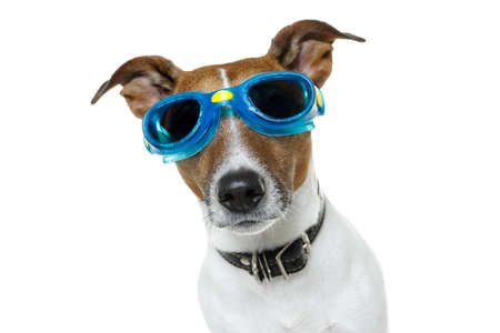 goggles: dog with goggles