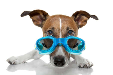 swim goggles: dog with goggles