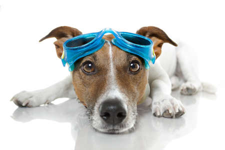 swimming costumes: dog with goggles