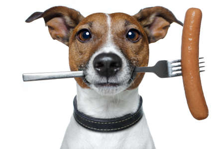 embutidos: perro con una salchicha salchicha en la cuchara Foto de archivo