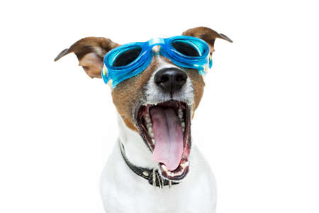 swim goggles: dog with goggles