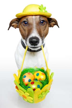 perros graciosos: perro sosteniendo la cesta de Pascua con huevos de colores