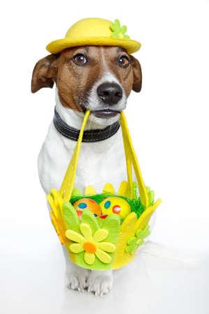 perro comiendo: perro sosteniendo la cesta de Pascua con huevos de colores