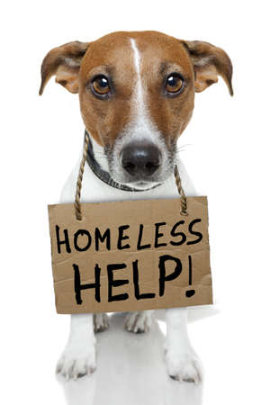 perro sin hogar con un cartón Foto de archivo - 12470944