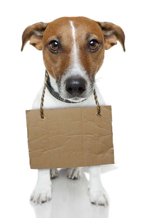 dog with a cardboard photo
