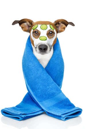 grooming: Dog with blue towel and a cream mask