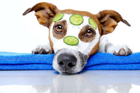 beaut?: chien avec un masque de beauté Banque d'images