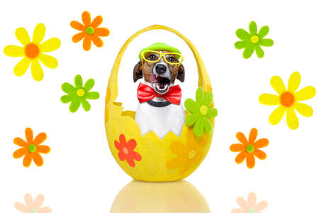 dog in colorful easter basket  with decoration photo