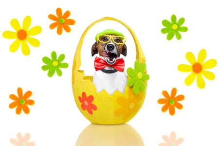perro en colorido cesta de pascua con la decoraci�n photo