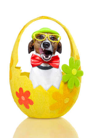small basket: dog in colourful easter basket  with decoration Stock Photo