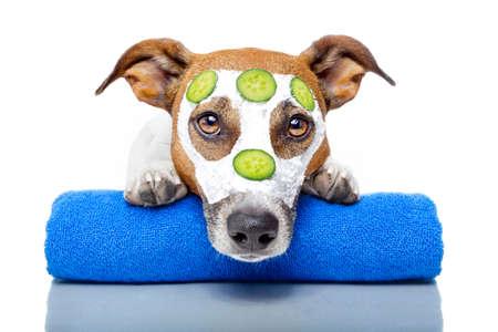 tratamiento facial: perro con una m�scara de belleza