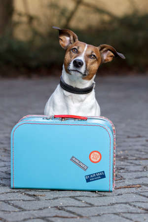 packing suitcase: dog with a blue bag Stock Photo
